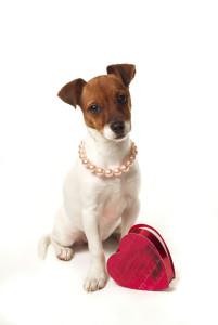 Puppy-with-heart-box-bigstock2578228